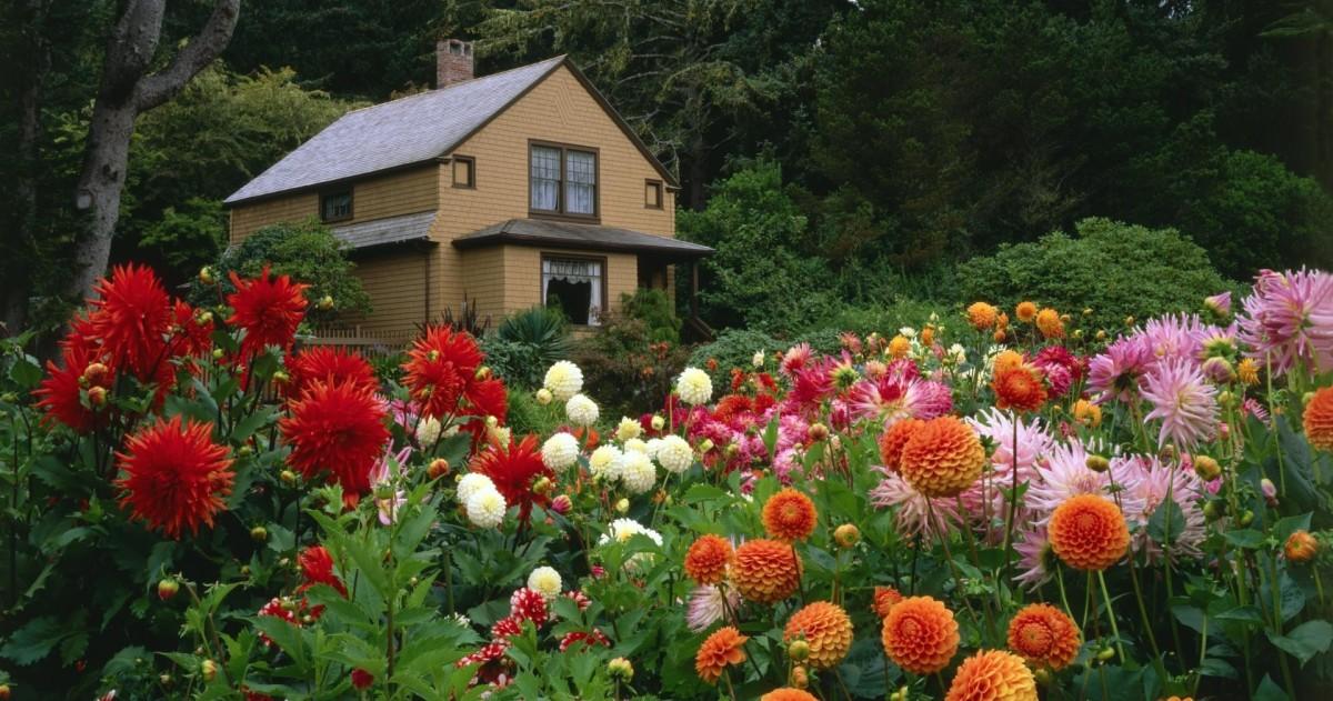Цветы для летней клумбы: что можно сажать в августе