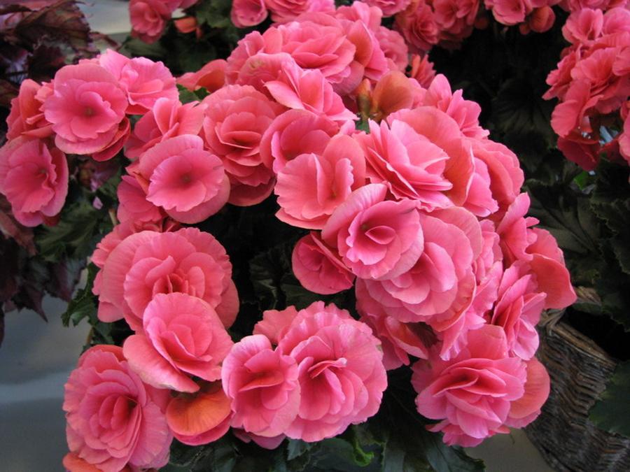 в цветах: черный, серый, бордовый, розовый.  в стиле экологический стиль.