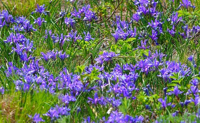 Ландшафт в цветах: голубой, бирюзовый, фиолетовый, серый, темно-зеленый. Ландшафт в .
