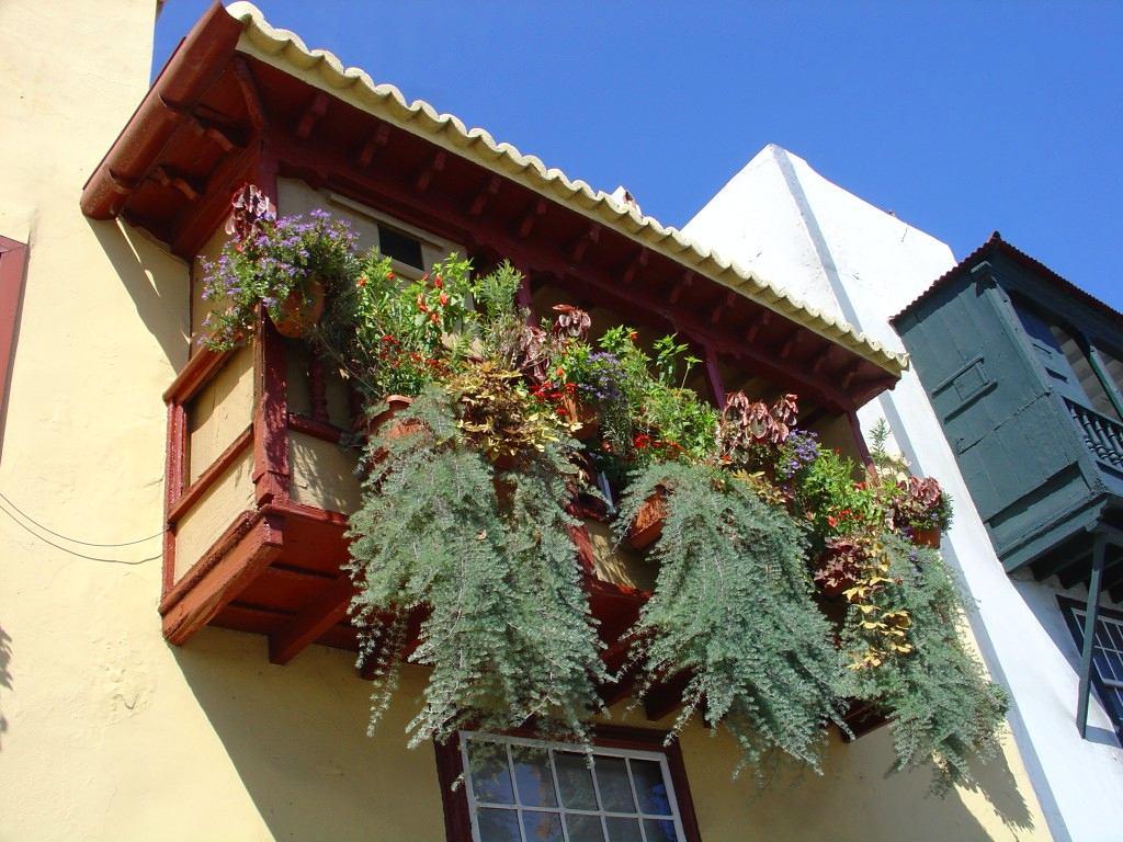 Вертикальное озеленение балкона: 20 идей и 10 советов - room.