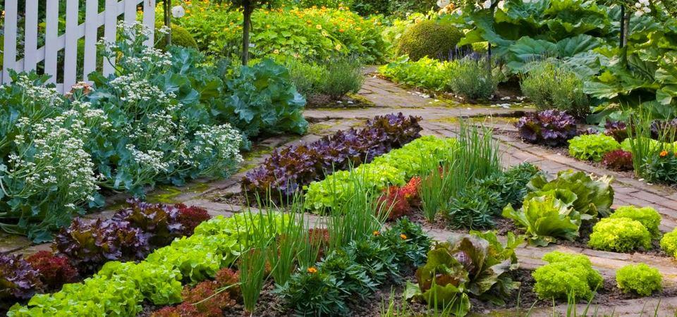 10 необычных идей для мини-огородов