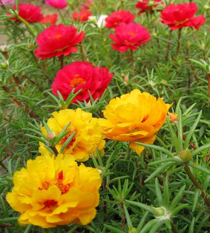 Ландшафт в цветах: красный, желтый, лимонный, темно-зеленый, бежевый. Ландшафт в .