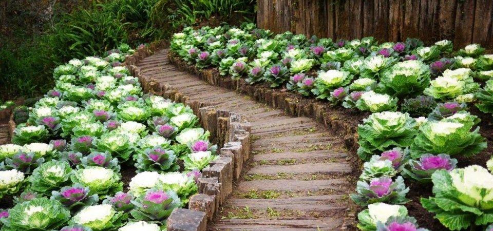 Лето на даче: 25 красивых идей обустройства овощных садов
