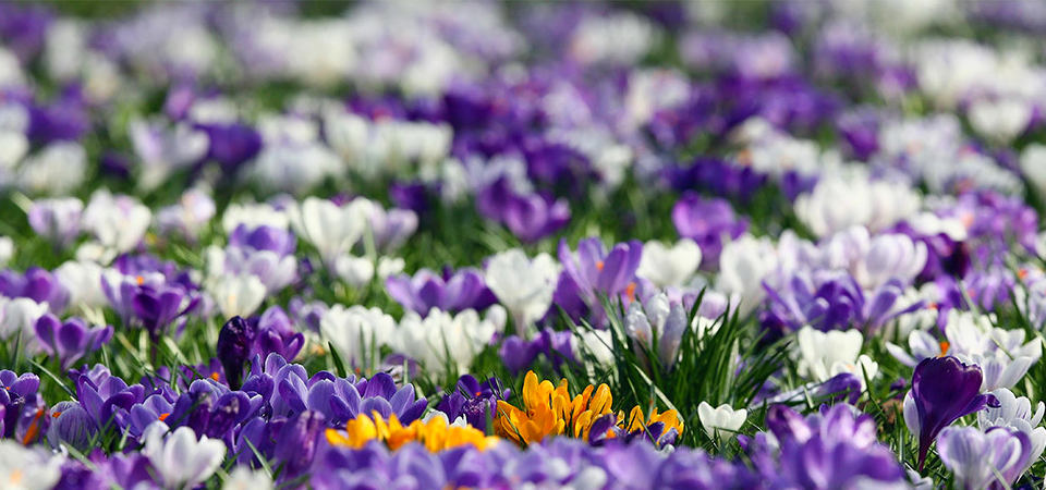 Как самостоятельно создать европейский весенний цветущий газон