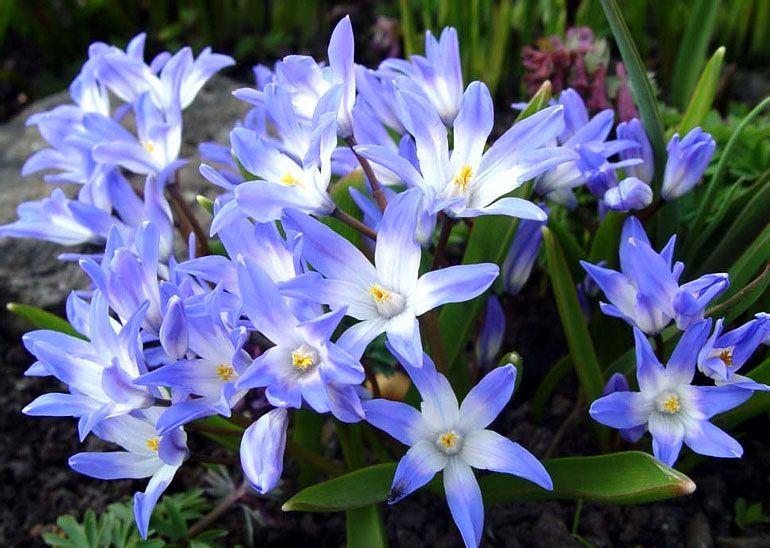 Ландшафт в цветах: голубой, бирюзовый, фиолетовый, серый, белый. Ландшафт в .