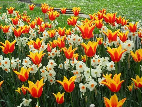 Ландшафт в цветах: оранжевый, желтый, светло-серый, белый, лимонный. Ландшафт в .