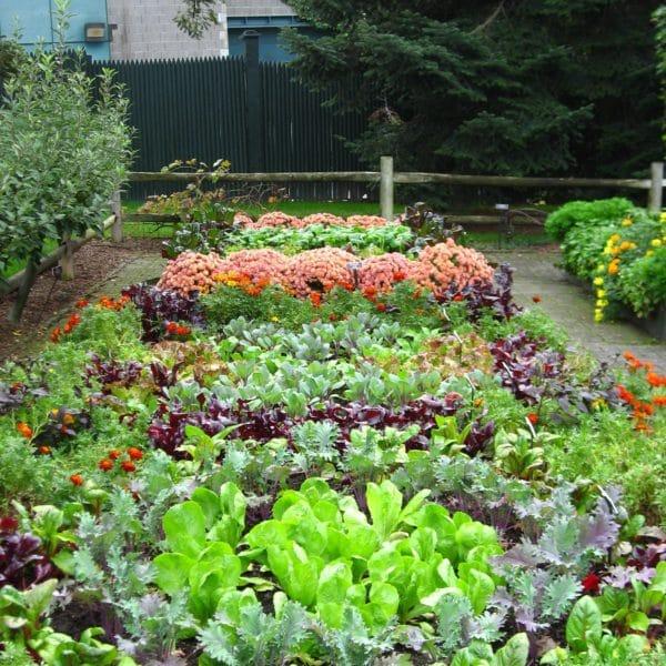 Small Backyard Landscaping Ideas Nz: Оригинальные идеи для клумбы: овощи вместо цветов