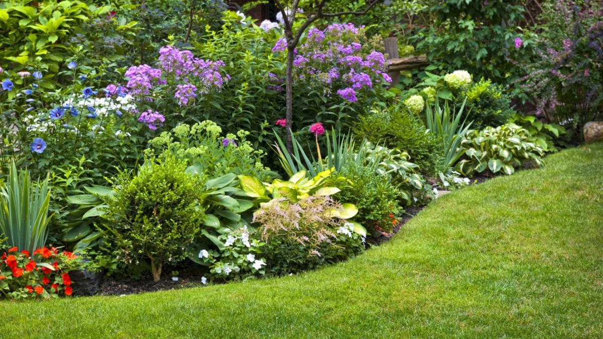 Сад и участок в  цветах:   Зеленый, Лимонный, Темно-зеленый, Фиолетовый.  Сад и участок в  .