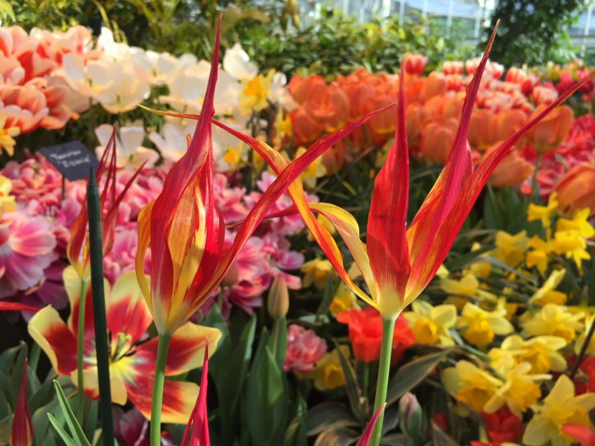25 фотографий необычных сортов тюльпанов. Мы и не думали, что они могут быть такими!