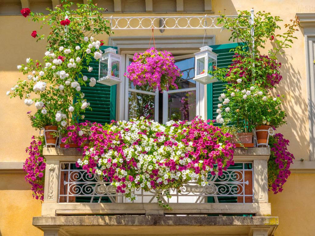 Домашняя клумба: 12 цветов для балкона