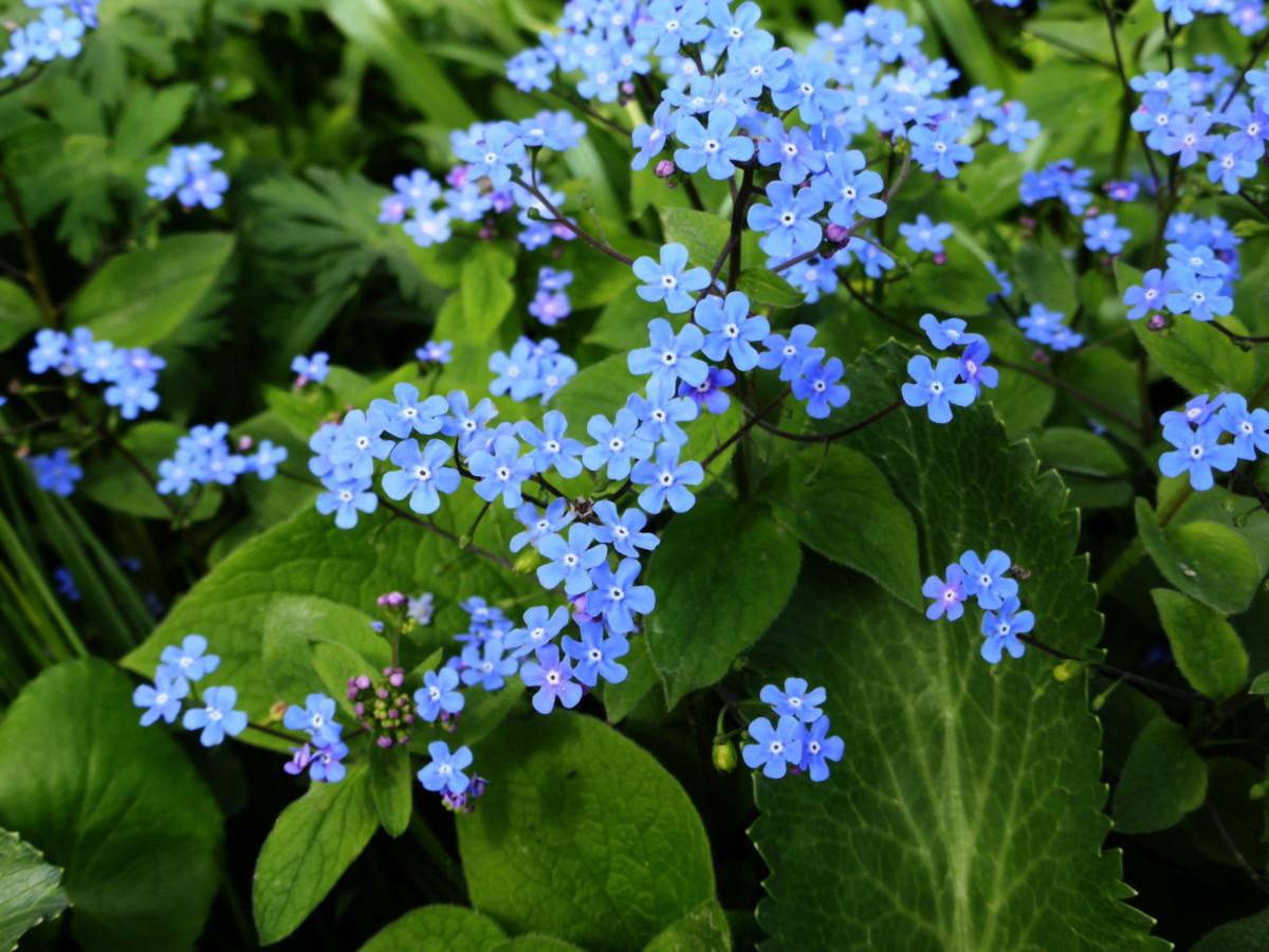 Неприхотливые цветы для сада: топ-10