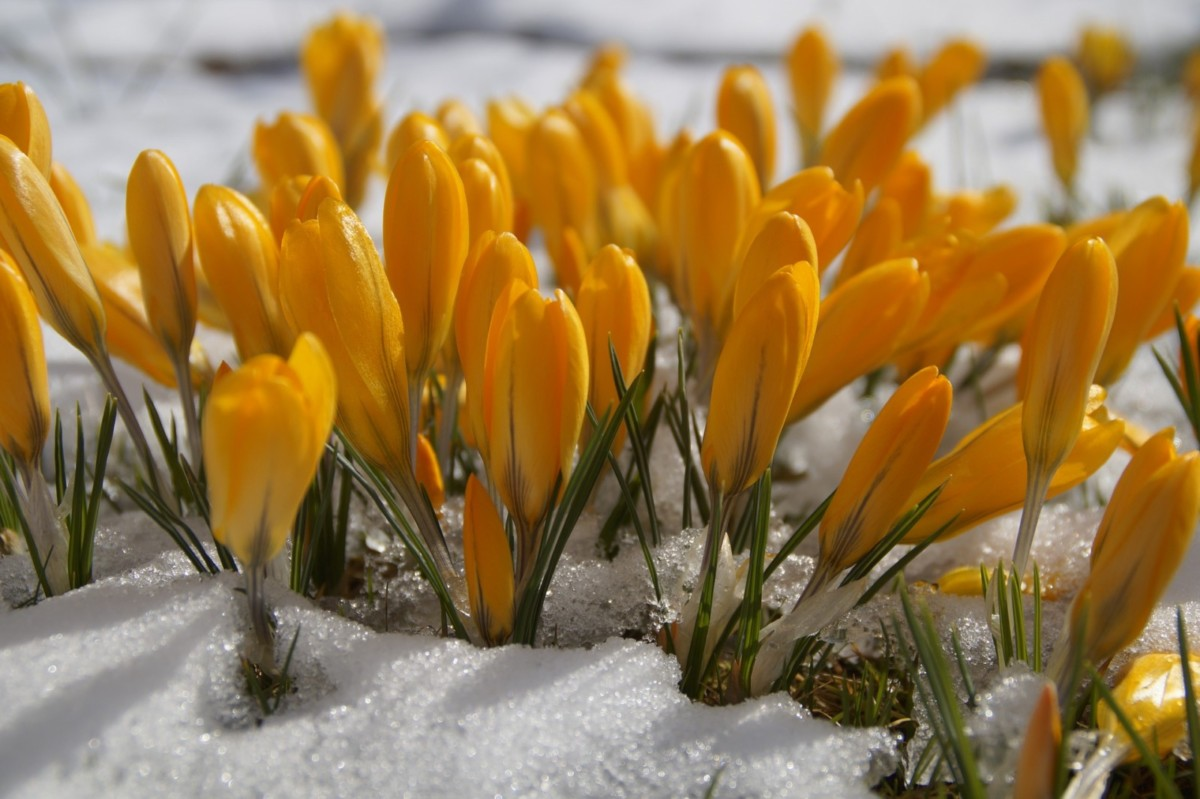 Красивый сад: список растений, цветущих поочерёдно с марта по ноябрь