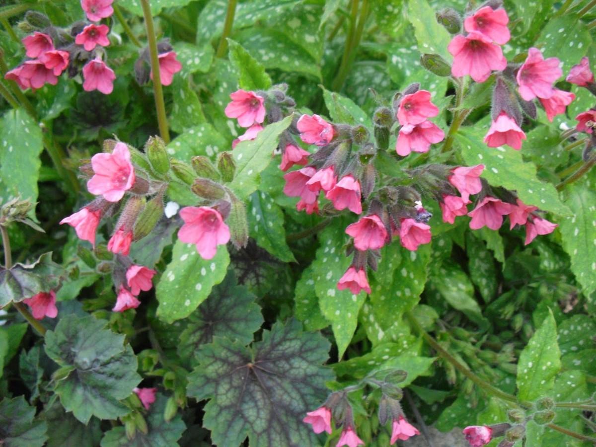Модный ландшафт: 10 дикорастущих растений для садовых клумб