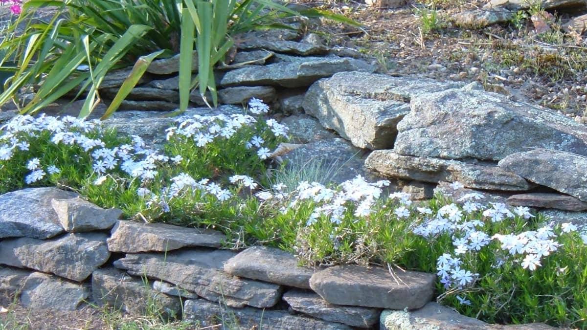 Виды камней в ландшафтном дизайне: в чем отличия, и как использовать